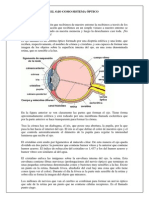El Ojo Como Sistema Óptico