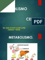 El Metabolismo