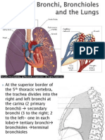 The Bronchi, Bronchioles and the Lungs