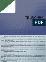 Curs 5 Topografica Trunchi