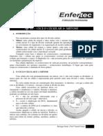 AP. 05 - Divisão Celular - Mitose