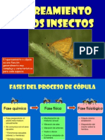 Reproduccion de Los Insectos