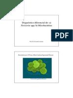 Aula+Diag+Neisseria+e+Micobactéria