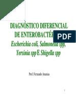 Diagnóstico enterobactérias
