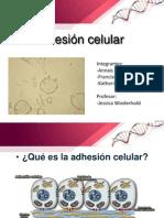 Adhesioncelular Lista