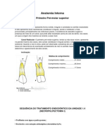 Anatomia Interna primeiro pré superior