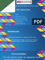 INFLAMACION Anatomia Patologica 1