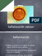 Señalizacion Intracelular