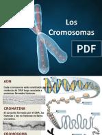cromosomas-120208105223-phpapp02