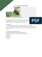 260222 15 EIBPfIMO Caracteristicasdelosanimalesinvertebrados (1)