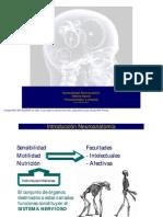 10 Clase - Generalidades Neuroanatómicas