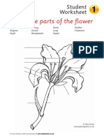 4 Pollination Worksheets