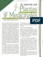 Plantas Medicinales Uruguay BSE