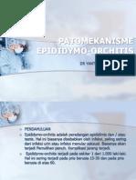 Patomekanisme Epididymo-Orchitis Fix