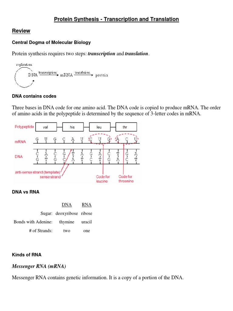 Transcription And Translation Biotech Rna Translation Biology