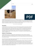 animais-de-.pdf