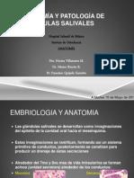 Anatomía y Patología de Glandulas Sublinguales