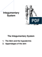 The Complete Integumentary System Study Guide