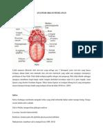 Anatomi Organ Penelanan