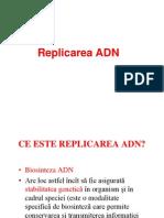 C3R Replicare Bun