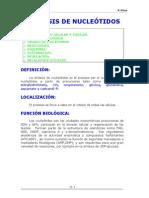 sintesisdeproteinas-130823163319-phpapp02