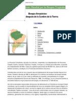 Bosque Amazónico_ 10 Años Después de La Cumbre de La Tierra2