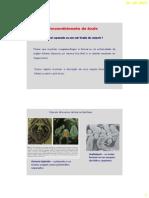 BDP_23_-_Desenvolvimento_do_ovulo.pdf