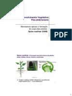 BDP_14_01_04_2014_DesVegetatPosEmbr_SAM-LeafOriginDev.pdf