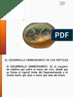 Desarrollo Embrionario de Los Reptiles J;J;E;J;Y;J;12
