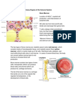 Primary Organs of the Immune System