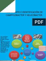 Diapositivas yamili campylobacter