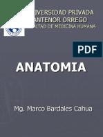 Anatomia Semana 3