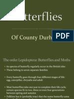 butterflies of county durham