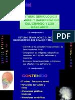 1a._Craneo_y_maxilares (1)