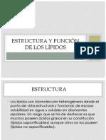 Estructura y Función de Los Lípidos