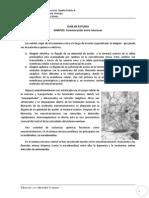 Guía de Estudio Sinapsis