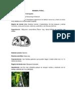 Nombre Común de Animales y Vegetales