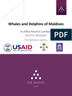 Whales and Dolphins of Maldives by Rachel Lambert