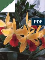 Tátrai Zsuzsa - Az Orchideák Gondozása