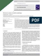 Mechanical Analysis of Eyelid Morphology