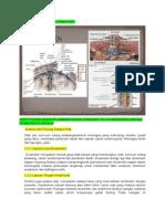 Anatomi Dan Fisiologi Selaput Otak