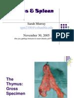 Lymph II Thymus-Spleen 2005