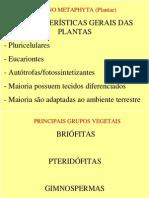 Botanica Toda