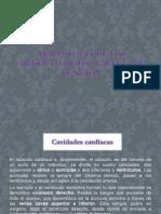 Morfología de Los Artículo de Los Válvulas y