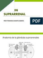 Función- Suprarrenal