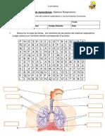Guía de Aprendizaje Sistema Respiratorio