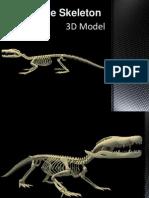 Crocodile Skeleton