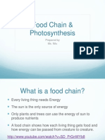 Lecture on Food Chains, Photosynthesis and Respiration