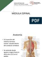 Medula Espinal Sesion