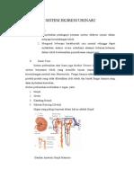 Sistem Eksresi Urinari Anfisman